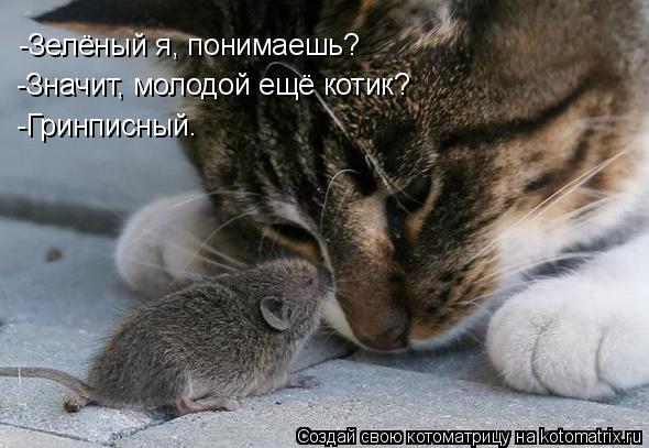 Котоматрица: -Зелёный я, понимаешь? -Значит, молодой ещё котик? -Гринписный.