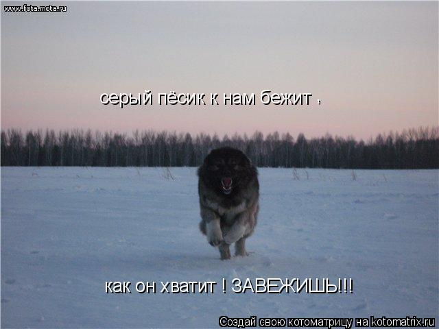 Котоматрица: как он хватит ! ЗАВЕЖИШЬ!!! , серый пёсик к нам бежит