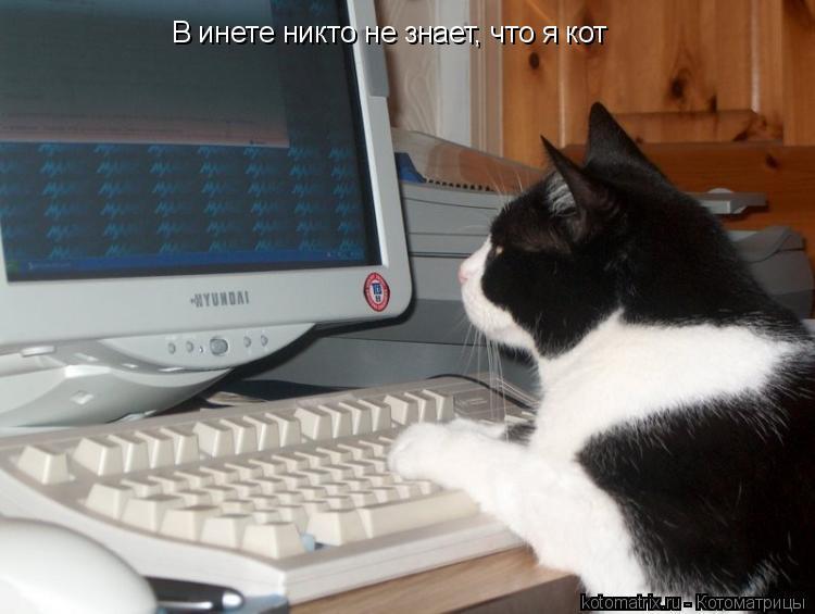 Котоматрица: В инете никто не знает, что я кот