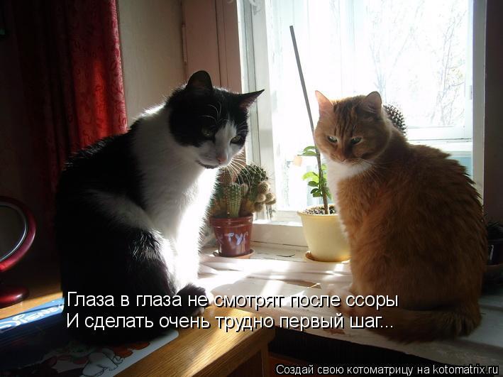Котоматрица: Глаза в глаза не смотрят после ссоры И сделать очень трудно первый шаг...
