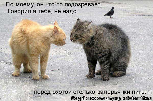 Котоматрица: - По-моему, он что-то подозревает. Говорил я тебе, не надо перед охотой столько валерьянки пить.