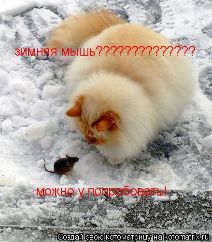 Котоматрица: зимняя мышь?????????????? можно у попробовать!