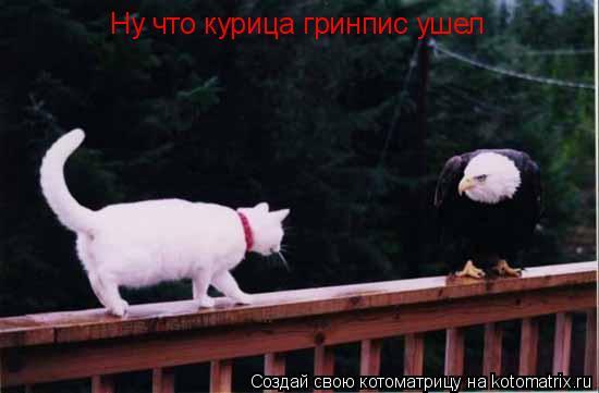 Котоматрица: Ну что курица гринпис ушел