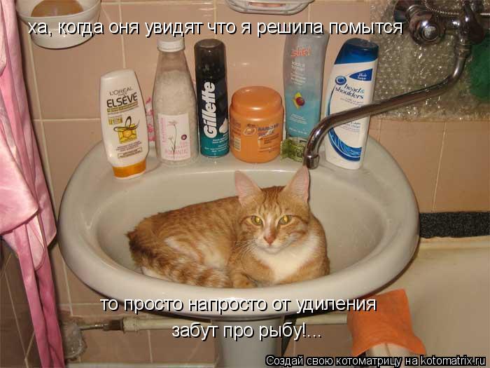 Котоматрица: xa, когда оня увидят что я решила помытся то просто напросто от удиления забут про рыбу!...