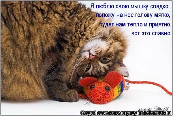 Котоматрица: Я люблю свою мышку сладко, положу на нее голову мягко, будет нам тепло и приятно, вот это славно!