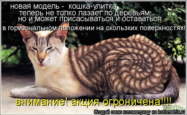 Котоматрица: новая модель -  кошка-улитка,  теперь не толко лазает по деревьям, но и может присасываться и оставаться в горизональном положении на скольз