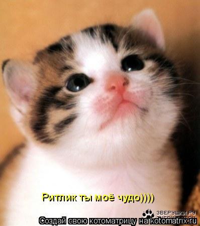 Котоматрица: Ритлик ты моё чудо))))