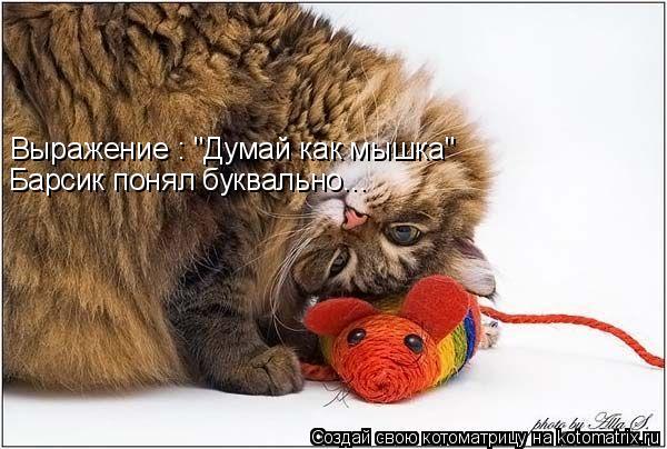 """Котоматрица: Выражение : """"Думай как мышка"""" Барсик понял буквально..."""