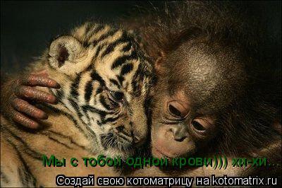 Котоматрица: Мы с тобой одной крови))) хи-хи...