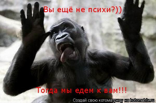 Котоматрица: Вы ещё не психи?))  Тогда мы едем к вам!!!
