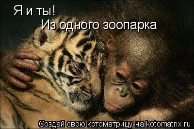 Котоматрица: Я и ты! Из одного зоопарка