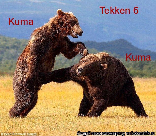 Котоматрица: Tekken 6 Kuma Kuma