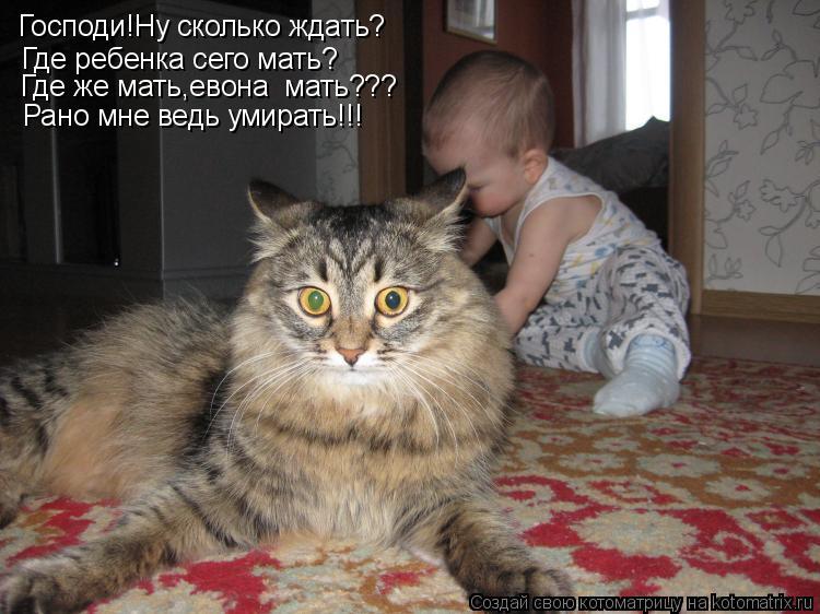 Котоматрица: Господи!Ну сколько ждать? Где ребенка сего мать? Рано мне ведь умирать!!! Где же мать,евона  мать???