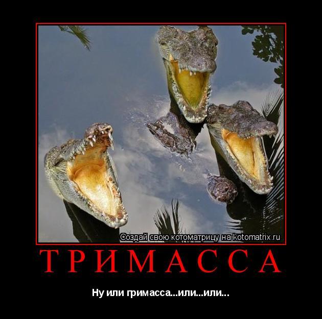 Котоматрица: Тримасса Ну или гримасса...или...или...