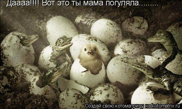 Котоматрица: Даааа!!!! Вот это ты мама погуляла.........
