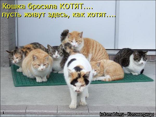 Котоматрица: Кошка бросила КОТЯТ.... пусть живут здесь, как хотят....