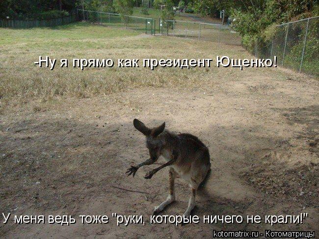 """Котоматрица: -Ну я прямо как президент Ющенко!  У меня ведь тоже """"руки, которые ничего не крали!"""""""