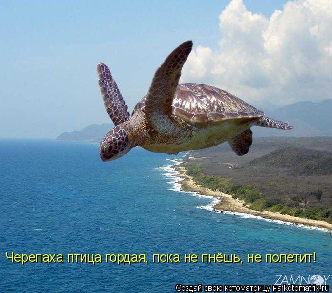 Котоматрица: Черепаха птица гордая, пока не пнёшь, не полетит!