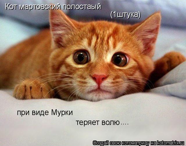 Котоматрица: Кот мартовский полостаый (1штука) при виде Мурки теряет волю ....