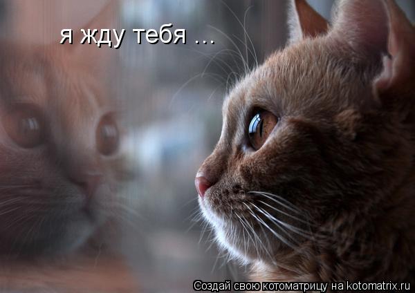 Котоматрица: я жду тебя ...