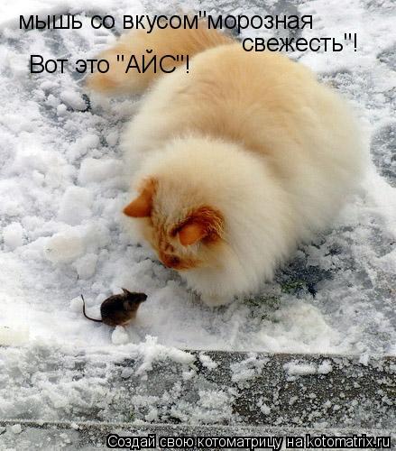 """Котоматрица: мышь со вкусом""""морозная свежесть""""! Вот это """"АЙС""""!"""