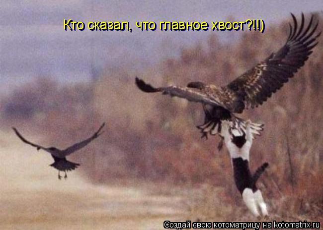 Котоматрица: Кто сказал, что главное хвост?!!) Кто сказал, что главное хвост?!!) Кто сказал, что главное хвост?!!)