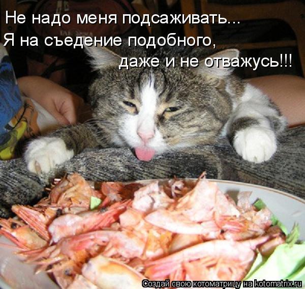 Котоматрица: Не надо меня подсаживать... Я на съедение подобного,  даже и не отважусь!!!