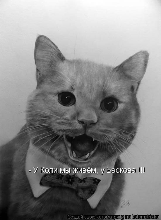 Котоматрица: - У Коли мы живём, у Баскова !!!