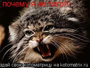 Котоматрица: почему я не тигр!!!