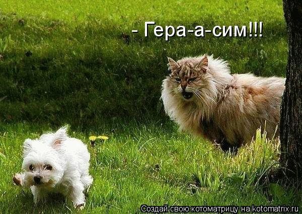 Котоматрица: - Гера-а-сим!!!