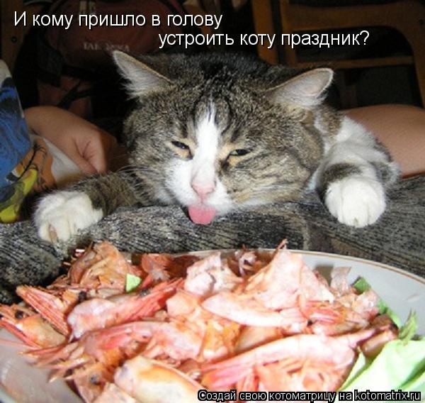Котоматрица: И кому пришло в голову устроить коту праздник?