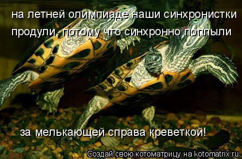 Котоматрица: на летней олимпиаде наши синхронистки продули, потому что синхронно поплыли  за мелькающей справа креветкой!
