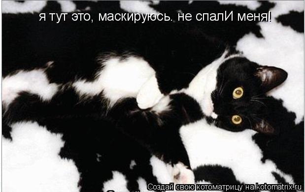 Котоматрица: я тут это, маскируюсь. не спалИ меня!