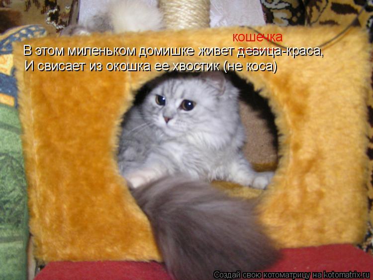 Котоматрица: И свисает из окошка ее хвостик (не коса) В этом миленьком домишке живет девица-краса, --------- кошечка