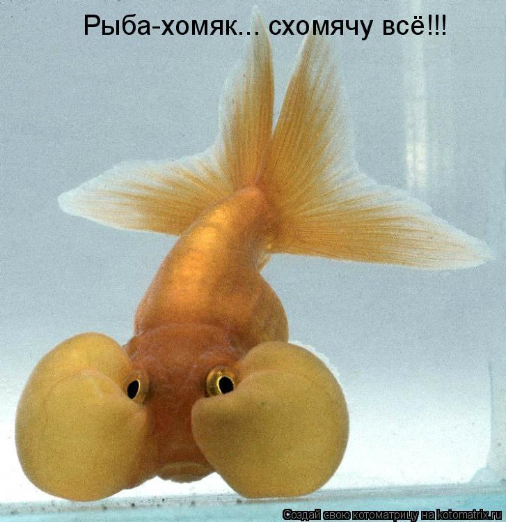 Котоматрица: Рыба-хомяк... схомячу всё!!!
