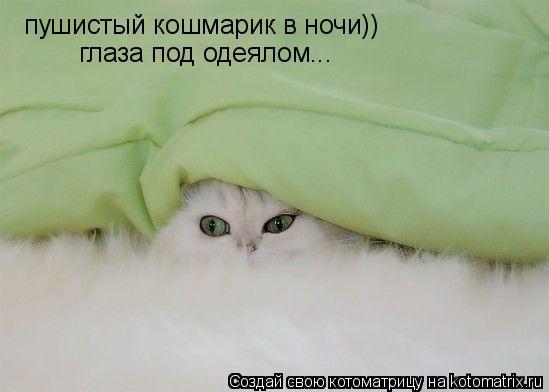 Котоматрица: пушистый кошмарик в ночи)) глаза под одеялом...