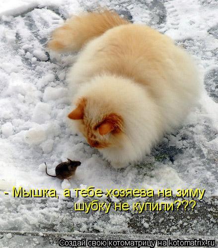 Котоматрица: - Мышка, а тебе хозяева на зиму  шубку не купили???