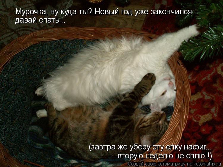 Котоматрица: Мурочка, ну куда ты? Новый год уже закончился давай спать... (завтра же уберу эту елку нафиг... вторую неделю не сплю!!)