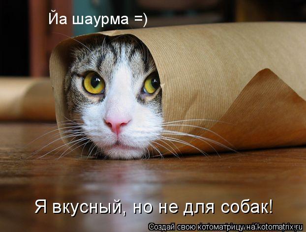 Котоматрица: Я вкусный, но не для собак!