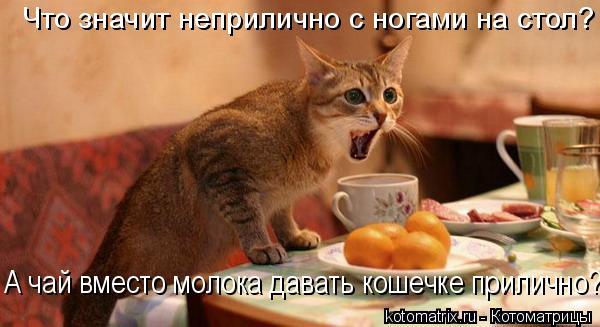 Котоматрица: Что значит неприлично с ногами на стол? А чай вместо молока давать кошечке прилично?!