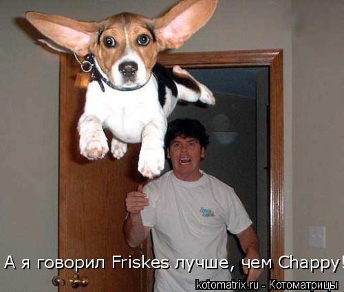 Котоматрица: А я говорил Friskes лучше, чем Chappy!