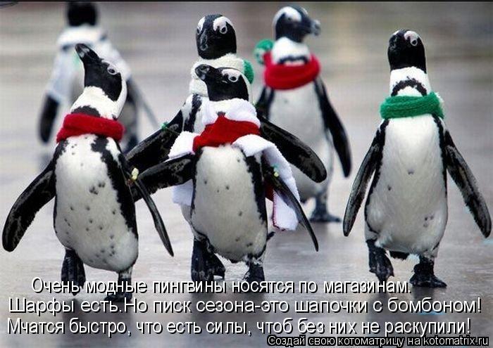Котоматрица: Шарфы есть.Но писк сезона-это шапочки с бомбоном! Мчатся быстро, что есть силы, чтоб без них не раскупили!  Очень модные пингвины носятся по м