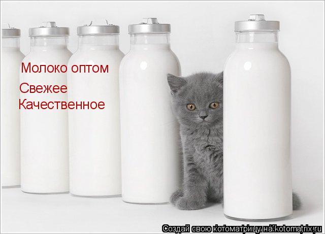 Котоматрица: Молоко оптом Свежее Качественное