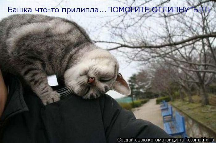 Котоматрица: Башка что-то прилипла...ПОМОГИТЕ ОТЛИПНУТЬ!!!! Башка что-то прилипла...ПОМОГИТЕ ОТЛИПНУТЬ!!!!