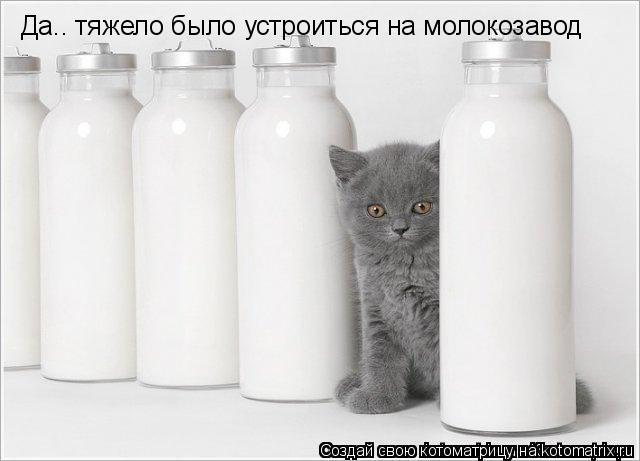 Котоматрица: Да.. тяжело было устроиться на молокозавод