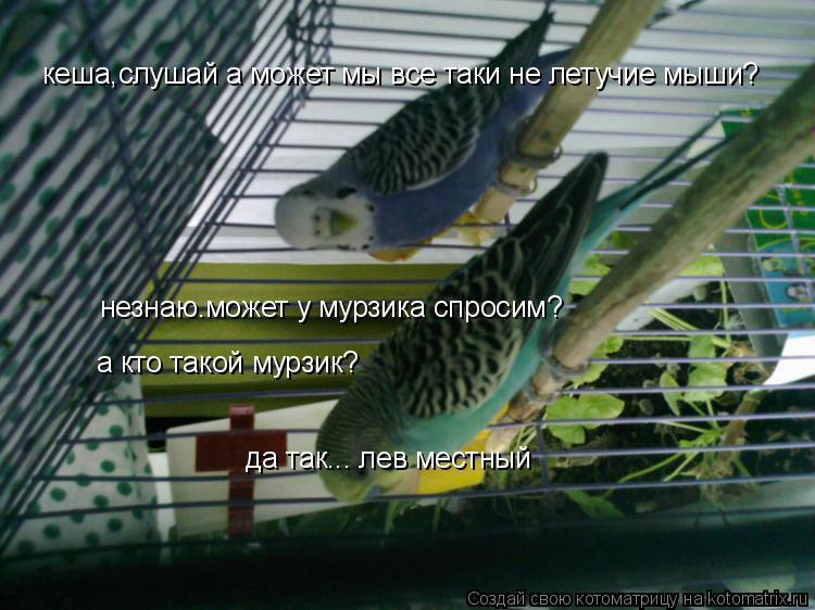 Котоматрица: кеша,слушай а может мы все таки не летучие мыши? незнаю.может у мурзика спросим? а кто такой мурзик? да так... лев местный