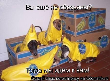 Котоматрица: Вы ещё не обезьяны? Тогда мы идём к вам!