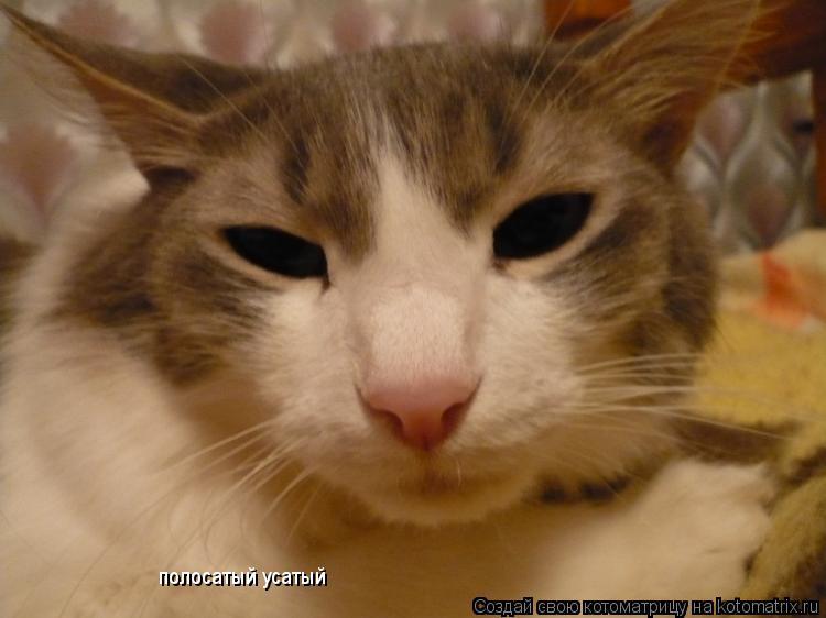 Котоматрица: полосатый усатый