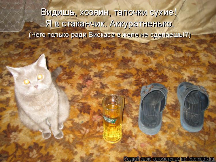 Котоматрица: Видишь, хозяин, тапочки сухие! Я в стаканчик. Аккуратненько. (Чего только ради Вискаса в желе не сделаешь!?)