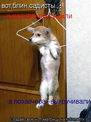 Котоматрица: вот,блин,садисты... вчера феном сушили а позавчера--выкручивали!!!!!!